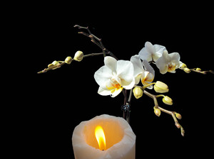 Orchids with candle on black