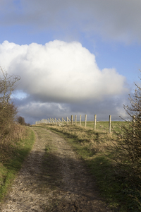 Winter walk: A long-distance footpath on the South Downs, West Sussex, England, in winter.