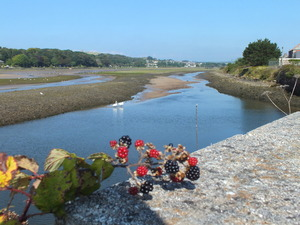 River Fruits: Hayle, Cornwall