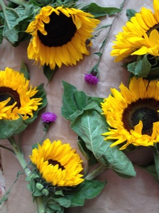 Sunflowers and Thistles