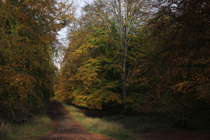 Into Autumn Wood