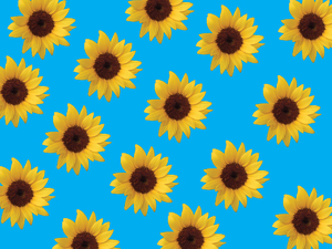 Sunflowers background 1