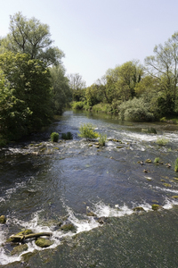 River: A river with a shallow weir in Bedfordshire, England.