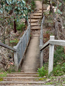 rugged bush steps2